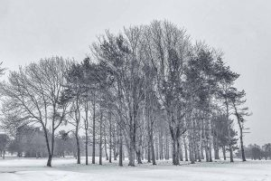 Ponteland Golf Club Silver Birch Copse in Winter Mono-5382 Xmas Card Ponteland Print & Publishing
